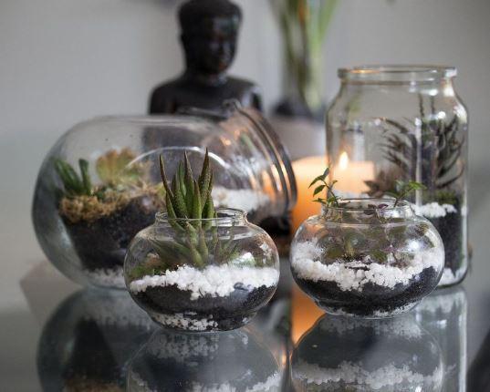 Añada plantas para añadir color y vida a su hogar ibicenco