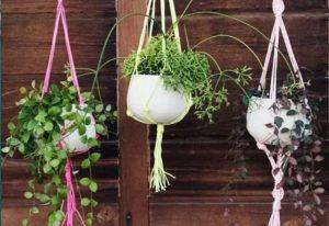 Colgador ibicenco plantas